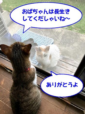chiko-chibi6.jpg