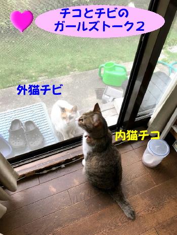 chikochibi0.jpg