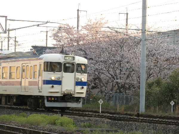 sakura415k-2019.jpg
