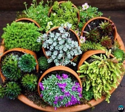 DIYHowto-DIY-Indoor-Succulent-Garden-Ideas-06.jpg