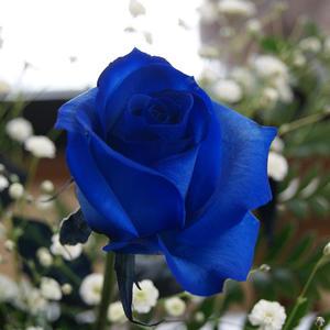 blue-buke-tanpin-ta.jpg
