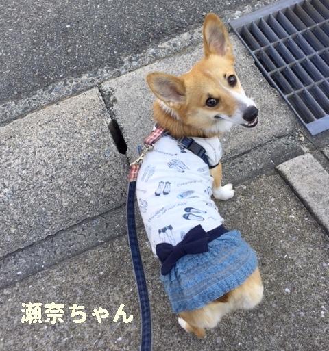 瀬奈ちゃん1w