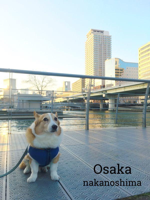 nakanoshima1.jpg