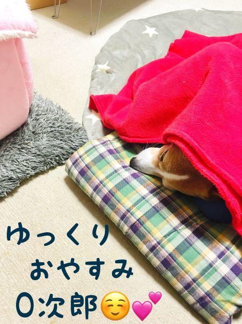 nerujiro2.jpg