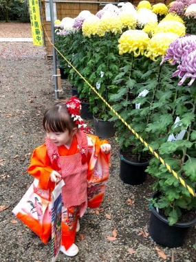 piyoko20181110-4.jpg
