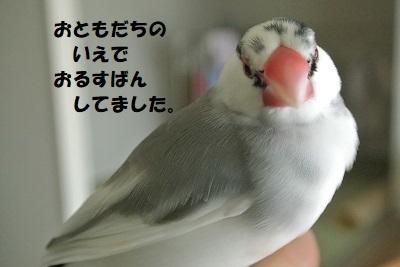DSC_8964済