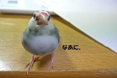 DSC_9149済