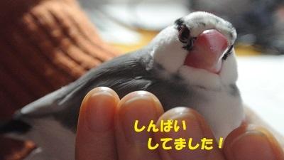 DSC_9207済