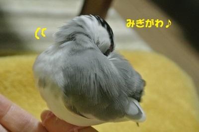 DSC_9177済