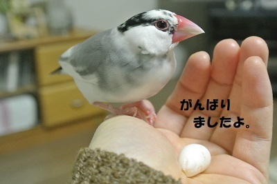 DSC_9259済
