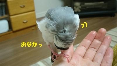DSC_0516済