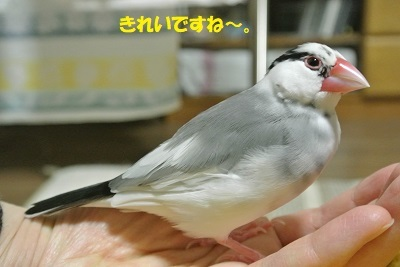 DSC_9315済