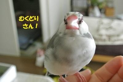 DSC_9401済