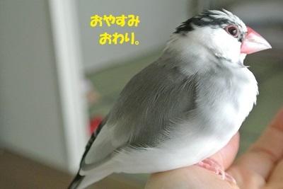 DSC_9445済