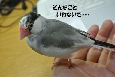 DSC_9478済