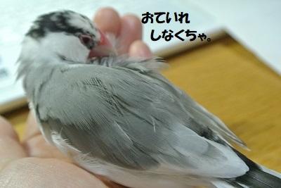 DSC_9492済