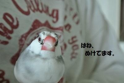 DSC_9512済