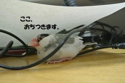 DSC_9530済