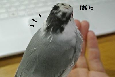 DSC_9612済