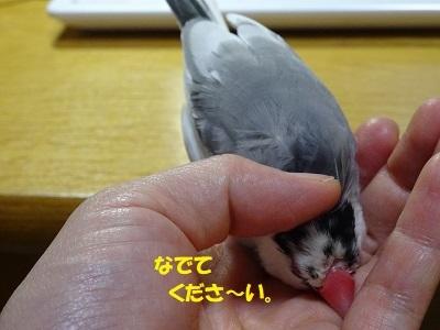 DSC05903済