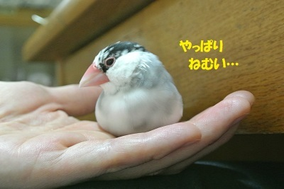 DSC_9733済
