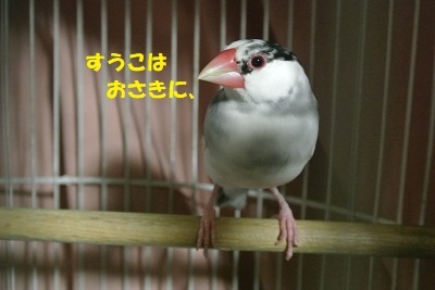 DSC_9141.jpg