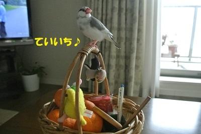DSC_9201.jpg