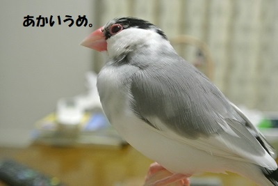 DSC_9254.jpg