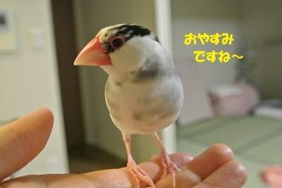 DSC_9406.jpg