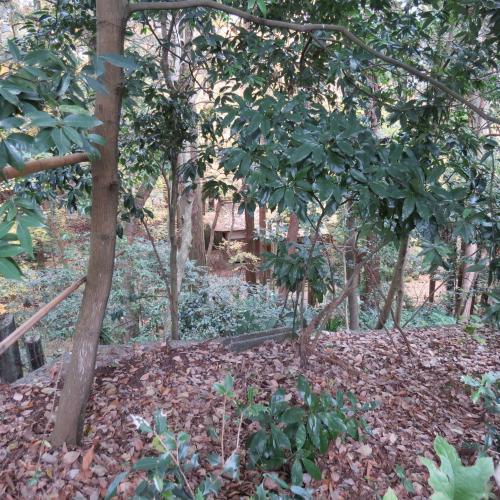成田山公園-105