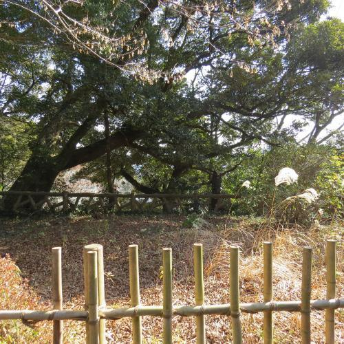 成田山公園-267