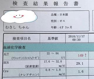 20181121191052e32.jpg
