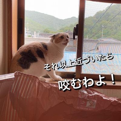 IMG-8079.jpg