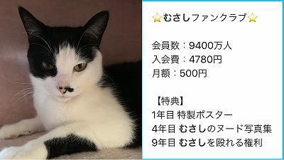 IMG-8119.jpg