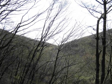 190501鍋割山~荒山 (2)s