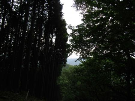 190621三頭山~御前山 (33)s