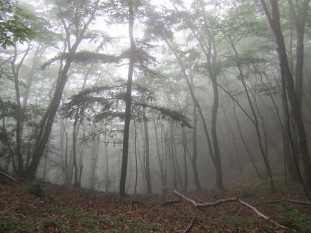 190622御前山~御岳 (12)s