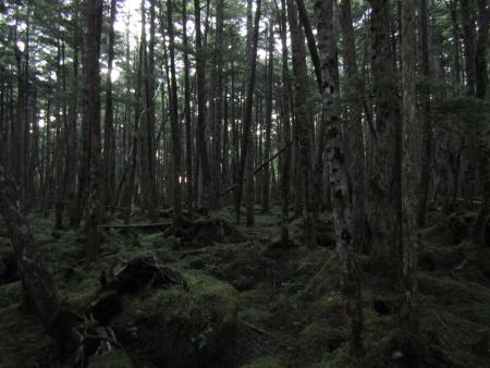 190804丸山~冷山~茶臼山 (3)s