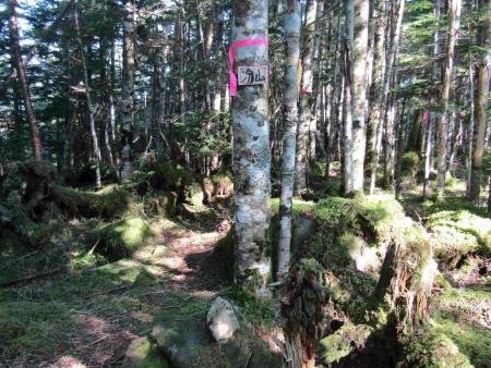 190804丸山~冷山~茶臼山 (30)冷山s