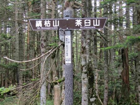 190804丸山~冷山~茶臼山 (60)s
