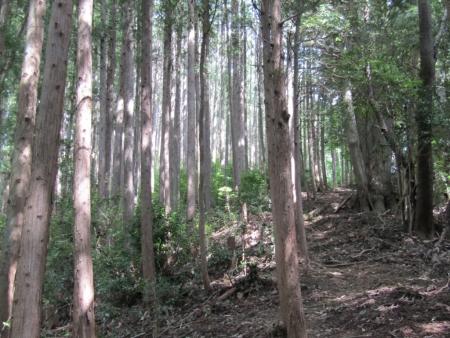 190920橋本山~虎秀山 (5)s