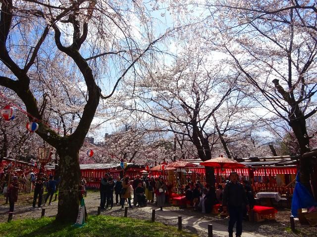 19,4,3平野神社 (2)