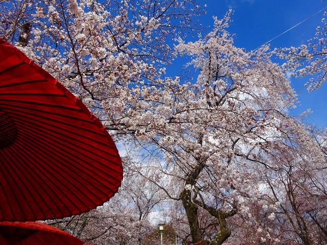 19,4,3平野神社