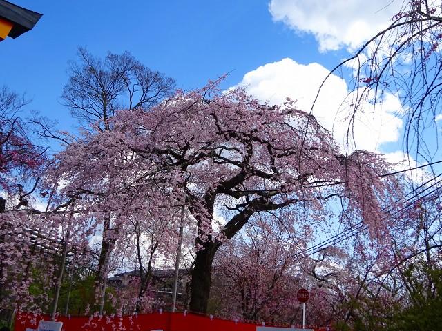 19,4,3平野神社 (9)