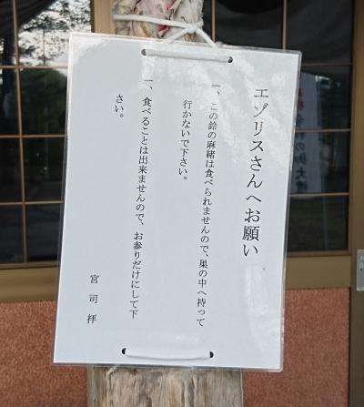 DSC_0635_(2)(上士幌神社のリス)
