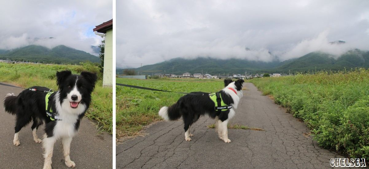 Dawn太とたべりこ周辺散歩