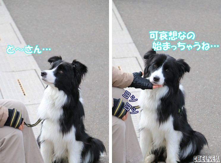 Dawn太_706日_能生あんこう祭り
