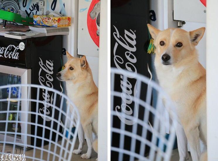 看板犬ルーク