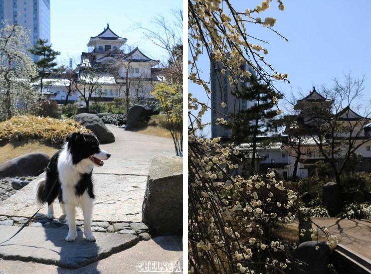 Dawn太と富山城