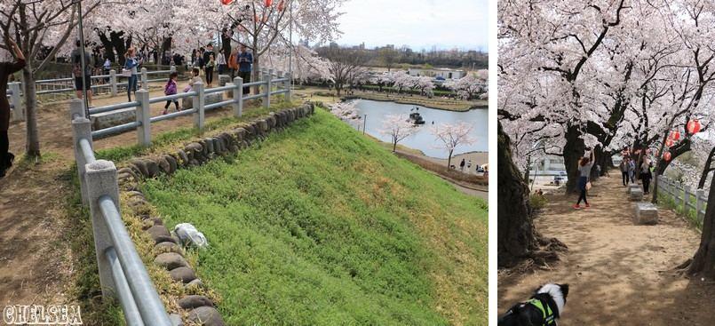 初桜@前橋公園♪